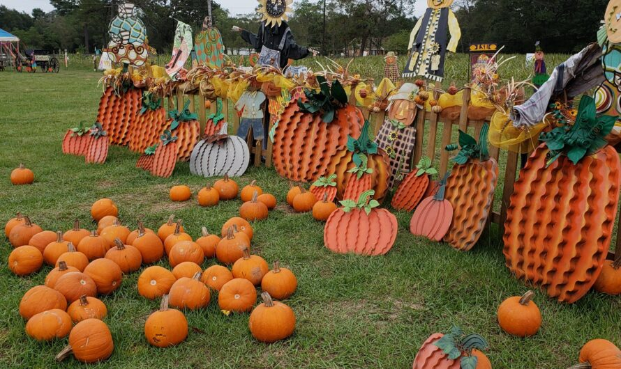 NOLA – Mrs. Heather's Pumpkin Patch