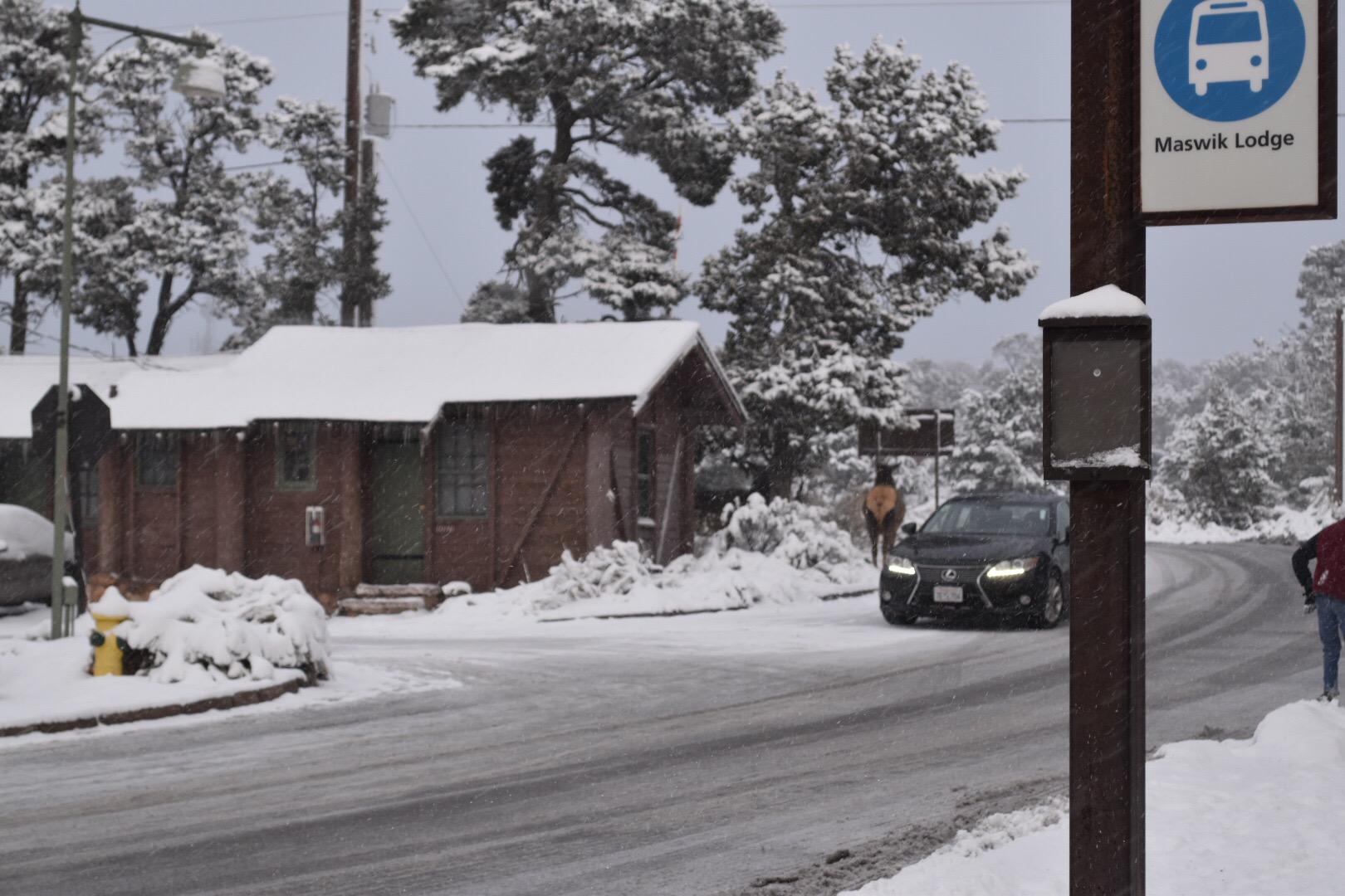 MilMomAdventures - Grand Canyon Maswik Lodge